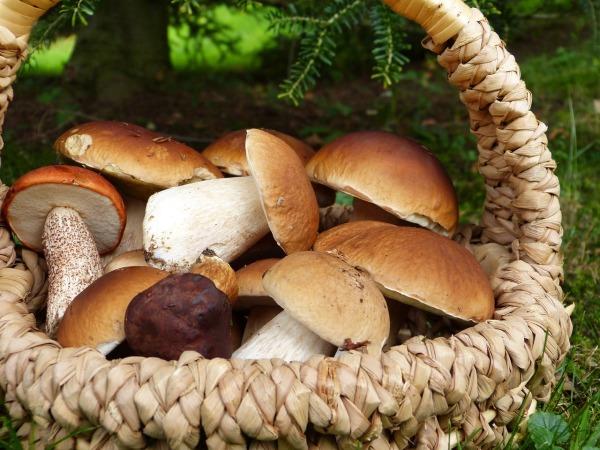 Mushrooms-Maroni.jpg